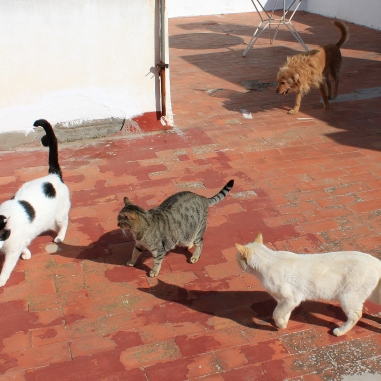 The cute animals gathered on the roof