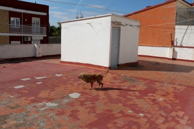 The dog on the roof top