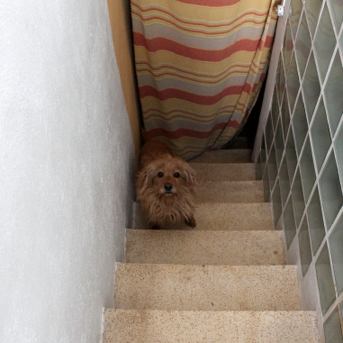 The cute dog on its way up to the roof