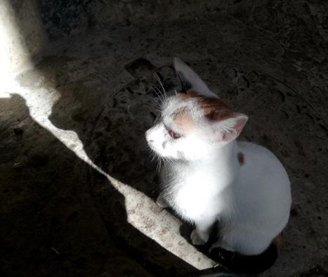 Mom cat