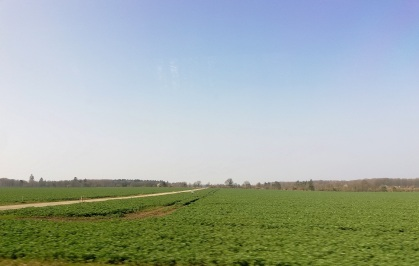 Danish field seen from the bus to Billund